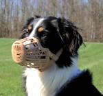 Trixie Dog Muzzle Plastic - Large - 10 inch