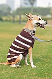 Mutt of Course Dog Sweater Purple - Medium