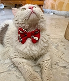 Mutt of Course Caturday Cat/Puppy Bow Tie