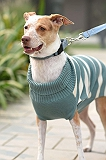 Mutt of Course Dog Sweater Emerald - Xlarge