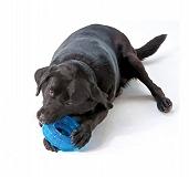 Outward Hound ORKA Tire Chew Toy