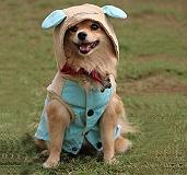 Touchdog Baby Models Hood Jacket - Small
