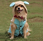 Touchdog Baby Models Hood Jacket - Large