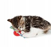 Outward Hound Kitty Chew Wheel