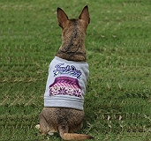 Touchdog Style Of Campus Winter T -Shirt - XLarge