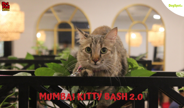 Felines Funday! Join Pet Fed's Kitty Bash! ..