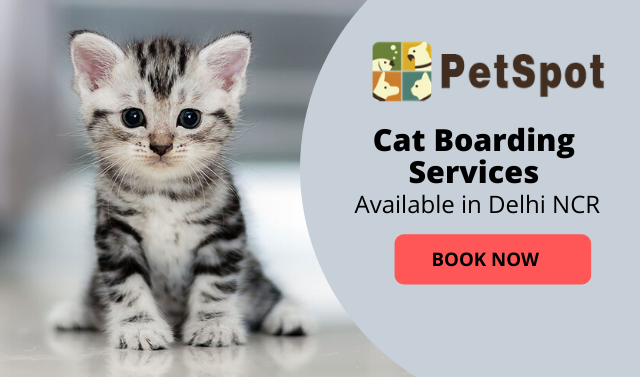 petspot_catboarding