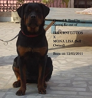 D/o of IRK CRNI LOTOS X MONA LISA (Self Owned)