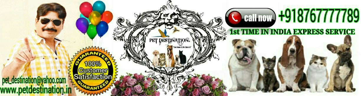 PET DESTINATION