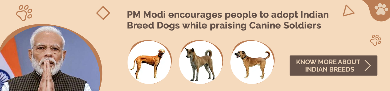 PM Modi encourages people to adopt Indian Breed Dogs while praising Canine Soldiers