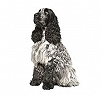 Cocker Spaniel (English)