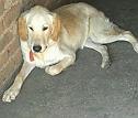 bhagat kennel