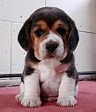 DOG & CAT CLINIC/S AHIWAL KENNEL/P ETSHOPPE
