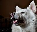 Pet Photogra phy by Manoo