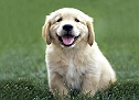 Sonia Pet Shop & Pet Clinic