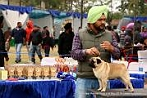 Amritsar Kennel Club | DogSpot.in | Dogs India