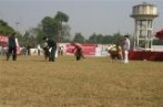 Bareilly Dog Show | DogSpot.in | Dogs India