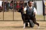 Chandigarh Kennel Club | DogSpot.in | Dogs India