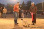 Delhi Kennel Club 2012 | DogSpot.in | Dogs India