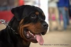 Delhi Kennel Club  | DogSpot.in | Dogs India