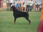 Lucknow Dog Show | DogSpot.in | Dogs India