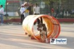 Dog Agility Show | DogSpot.in | Dogs India