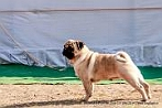 Doon Valley Kennel Club | DogSpot.in | Dogs India