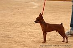 Nagpur Canine Club | DogSpot.in | Dogs India