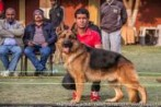 The Shepherd Club- Delhi | DogSpot.in | Dogs India
