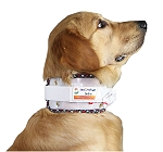 Inno Cervical Collar For Dog Size - 8