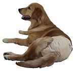 Inno Wear And Diaper For Dog - Large