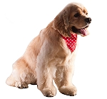 DogSpot Polka Dot Dog Bandana Red - Small