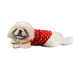 DogSpot Yellow Polka Dots On Red Sweater size - 12
