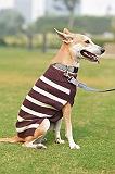 Mutt of Course Dog Sweater Purple - Xlarge