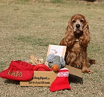 DogSpot Exclusive Christmas Hamper - Medium