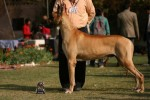 Agra Dog Show- 3 Feb 2008 | Agra Dog Show, Taj Kennel Club