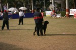 Agra Dog Show- 3 Feb 2008 | Agra 2008