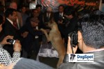 Agra Dog Show 2010 | Highly Qualified,Lineup,