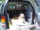 Ballu after his bath, going for a drive |