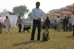 Bareilly Dog Show | boxer,