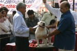 Bareilly Dog Show | bulldog,