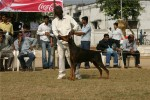 Bareilly Dog Show | doberman,