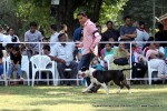 Baroda Dog Show 4th Nov 2012 | sw-64, ex-32,staffordshire terrier,