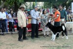 Baroda Dog Show 4th Nov 2012 | sw-64, ex-34,lineup,sw-64,