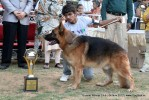 Baroda Dog Show 4th Nov 2012 | sw-64, ex-164,lineup,sw-64,