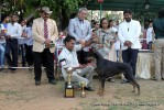 Baroda Dog Show 4th Nov 2012 | sw-64, ex-119,lineup,sw-64,