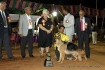 Best Bred in India | sw-11,ex-266,gsd,lineup,
