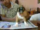 boxers pups mb.9301820282 | boxers pups mb.9301820282