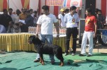 All Breeds Championship Dog Show Ghaziabad | all breeds championship dog show ghaziabad
