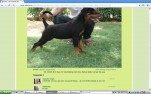 Ch Rottweiler | Puppy available!!!! Contact sidhar73@gmail.com